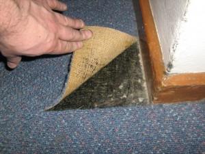 Carpet Underlay 2
